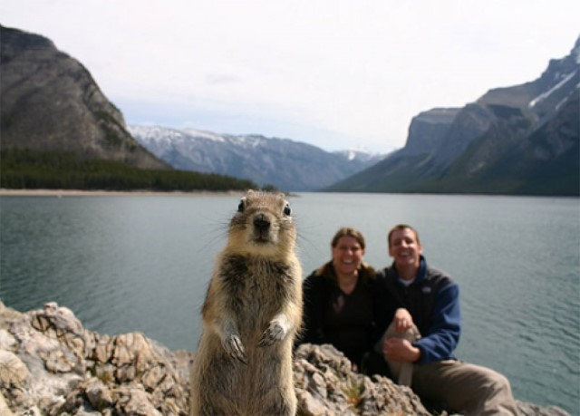 Nuts-the-Squirrel